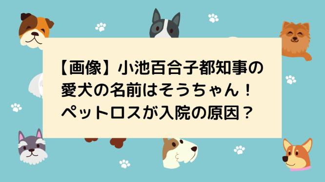 【画像】小池百合子都知事の愛犬の名前はそうちゃん!ペットロスが入院の原因?